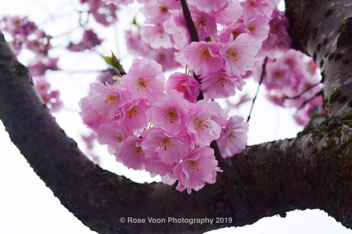 A collection of amazing Spring photography